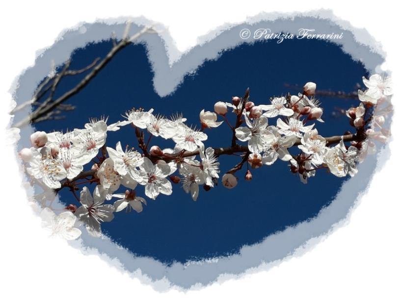 fiori_cuore_compressa